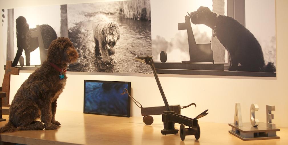 Ace and Porta do Multimedia